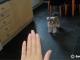 How to teach your dog 'wait'