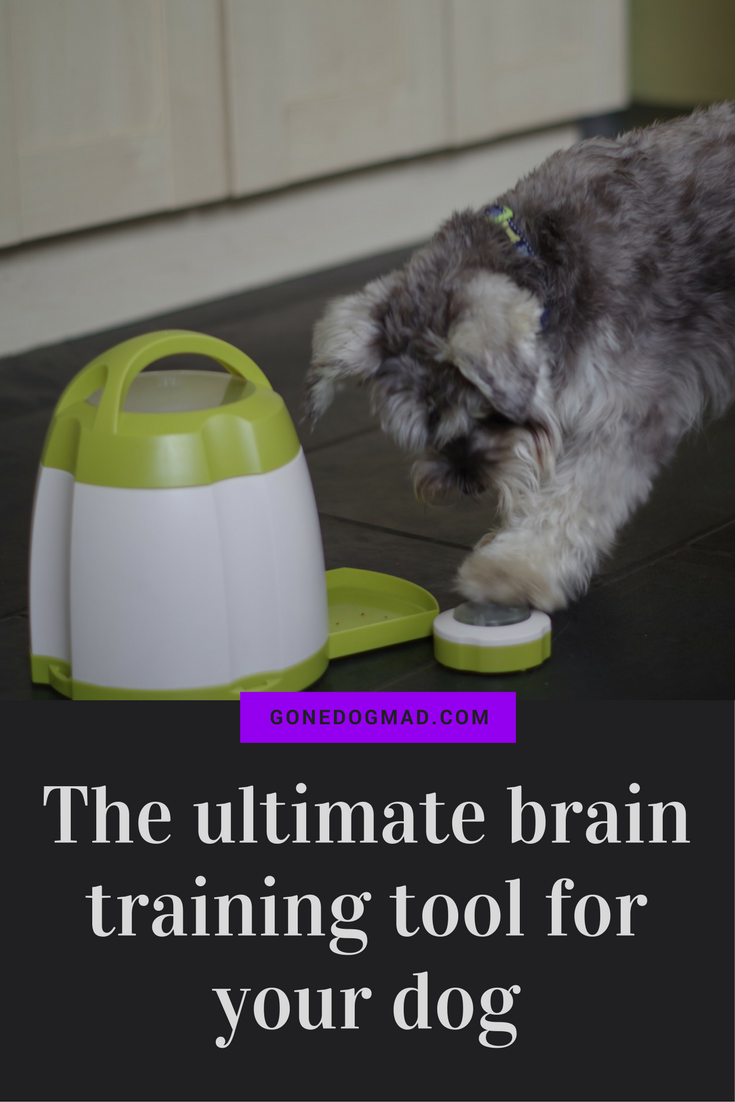 Enrichment ideas for dogs. An honest review of the Trixie Memory Trainer. #Canineenrichment #dogbraingames #dogpuzzlegames #dogs via @gonedogmad1