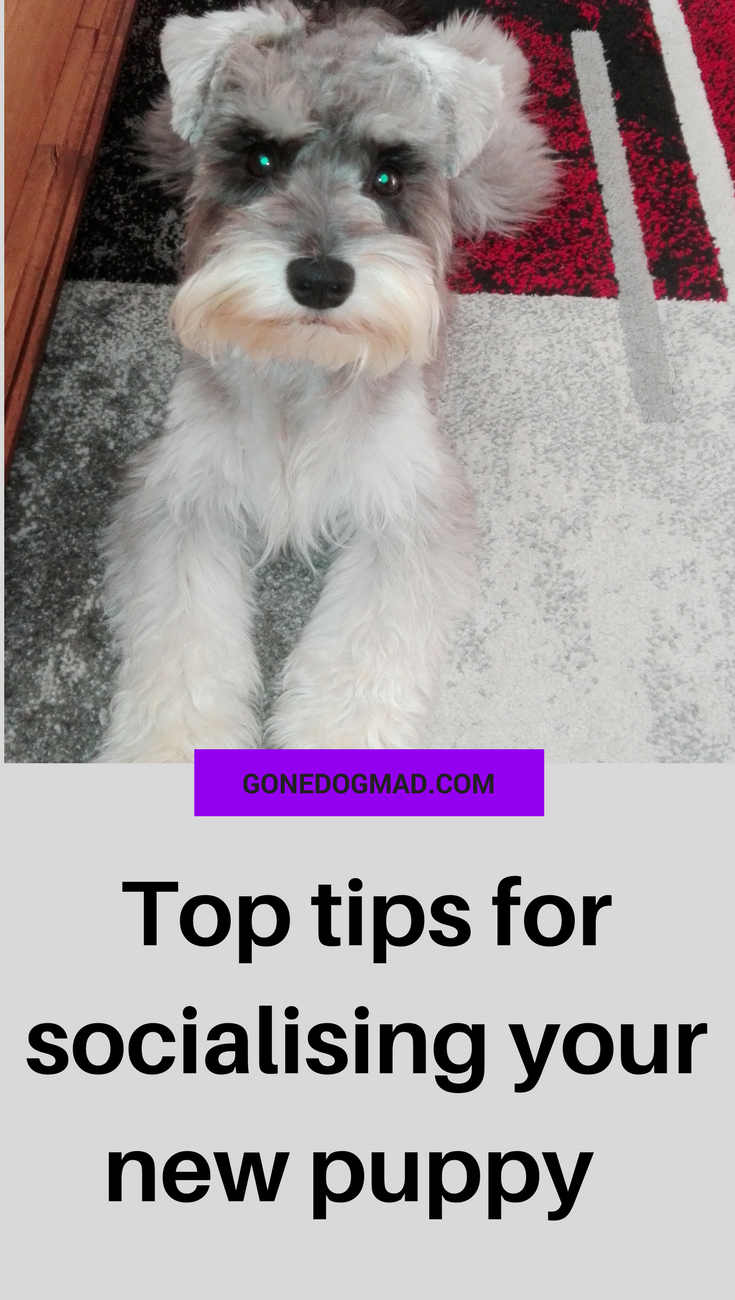 The crucial reasons why socialisation is so important and what you can do to ensure a well socialised pup. #dogcaretips #puppytips #dogplay via @gonedogmad1
