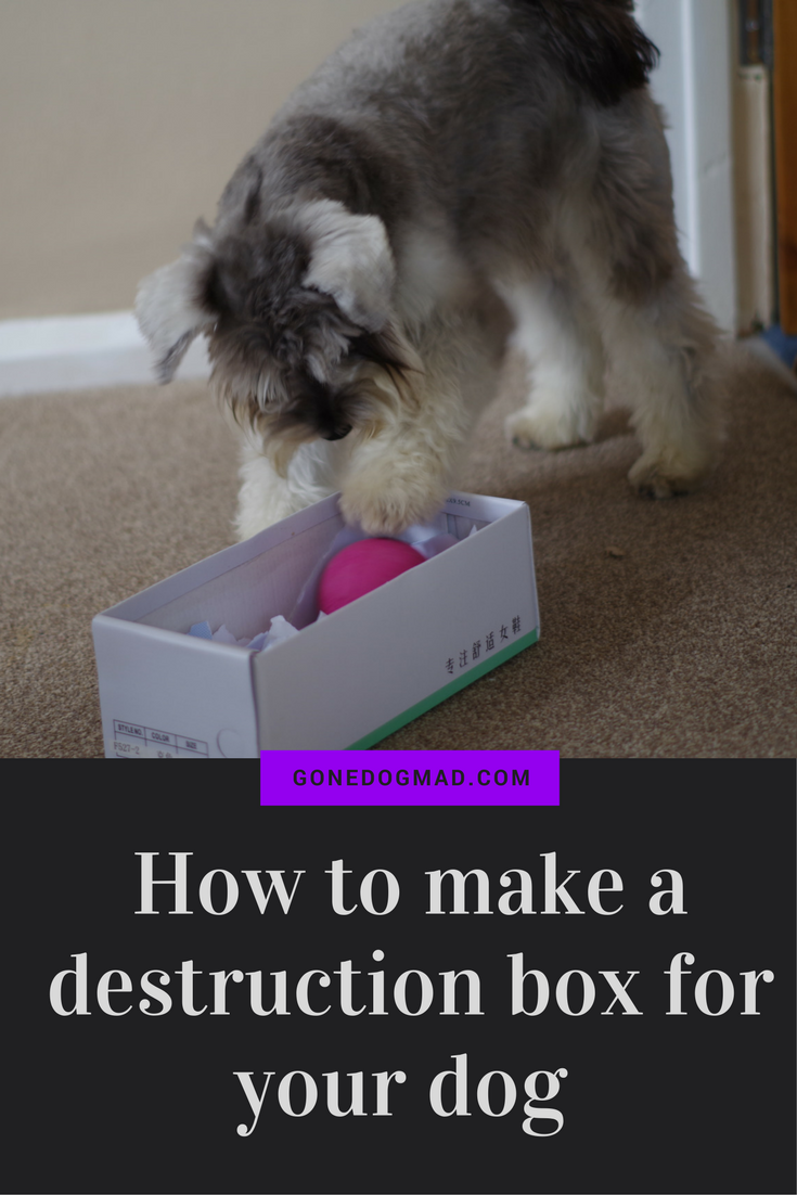 Great enrichment idea for your dog. DIY puzzle games to let your dog use all their senses to find hidden treats. #canineenrichment #braingamesfordogs #dogplayideas via @gonedogmad1