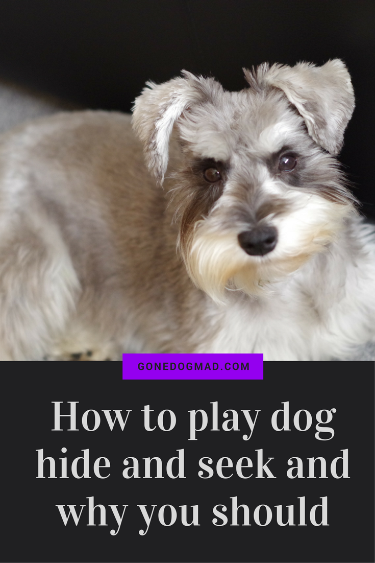 Dog hide and seek is a real classic and such good fun to play with your beloved pooch. #canineenrichment #dogtips #dogplayideas via @gonedogmad1