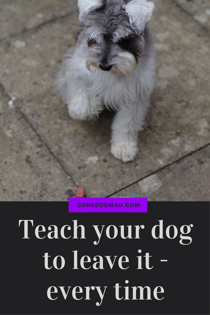 Train your dog to listen to the 'leave it' command. Stop your dog grabbing things they shouldn't have! #dogtrainingtips #obediencetraining #dogtips #dogs via @gonedogmad1