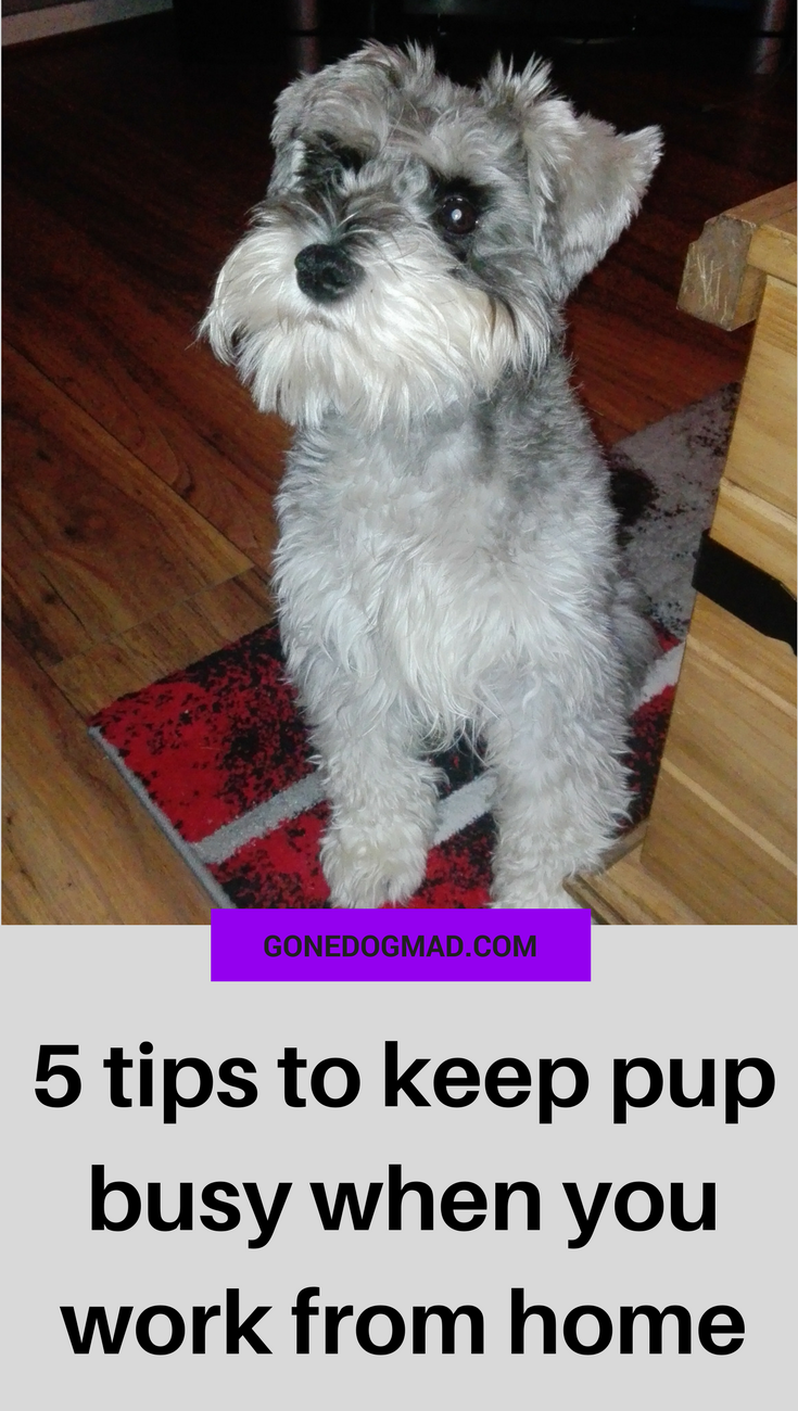5 tips to keep pup busy when you need to get s**t done! #dogcaretips #workingfromhometips via @gonedogmad1