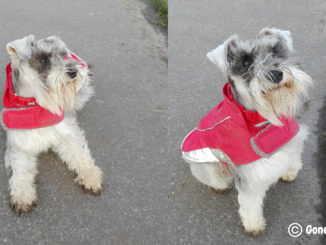 Dog products for winter