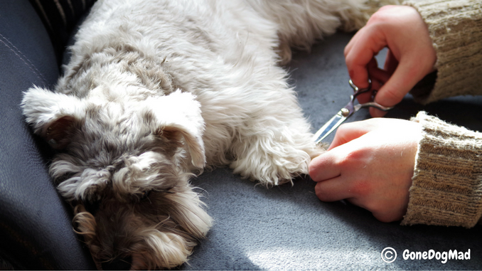 How to keep a dog calm while grooming, how to groom a difficult dog, how to groom when my dog won't sit still