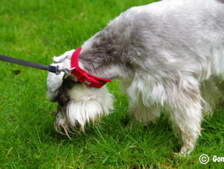 how to stop your dog from scavenging, dog eats everything he sees, stop dog eating everything in sight
