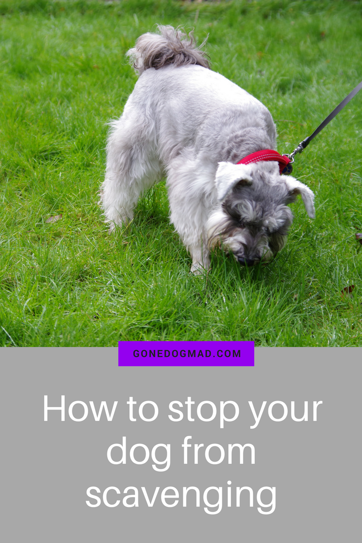 8 simple techniques to curb scavenging on walks #dogtraining #doglovers #dogwalking #dogcare #dogs #dogbehaviour via @gonedogmad1
