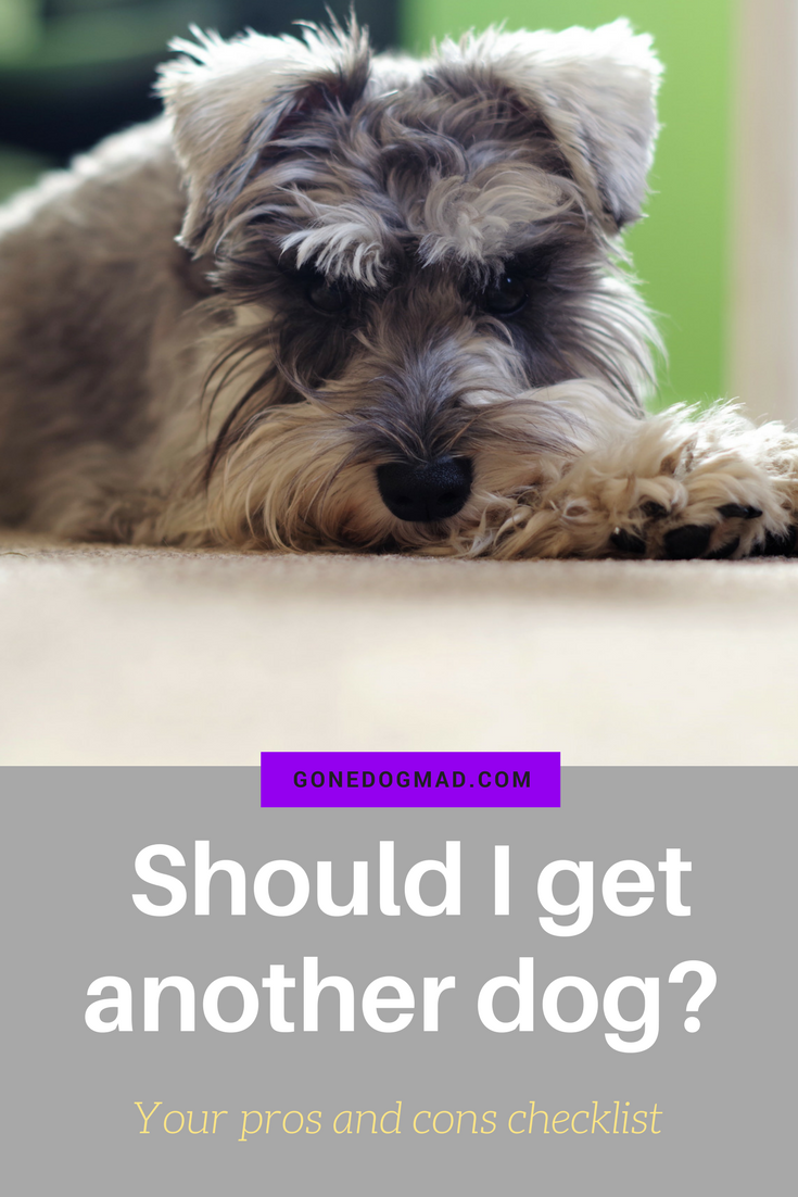 Find out if a second dog is the right move for your family, your wallet, and your existing dog. #dogs #dogtips #dogcare #dogownertips #doglife #doglovers via @gonedogmad1