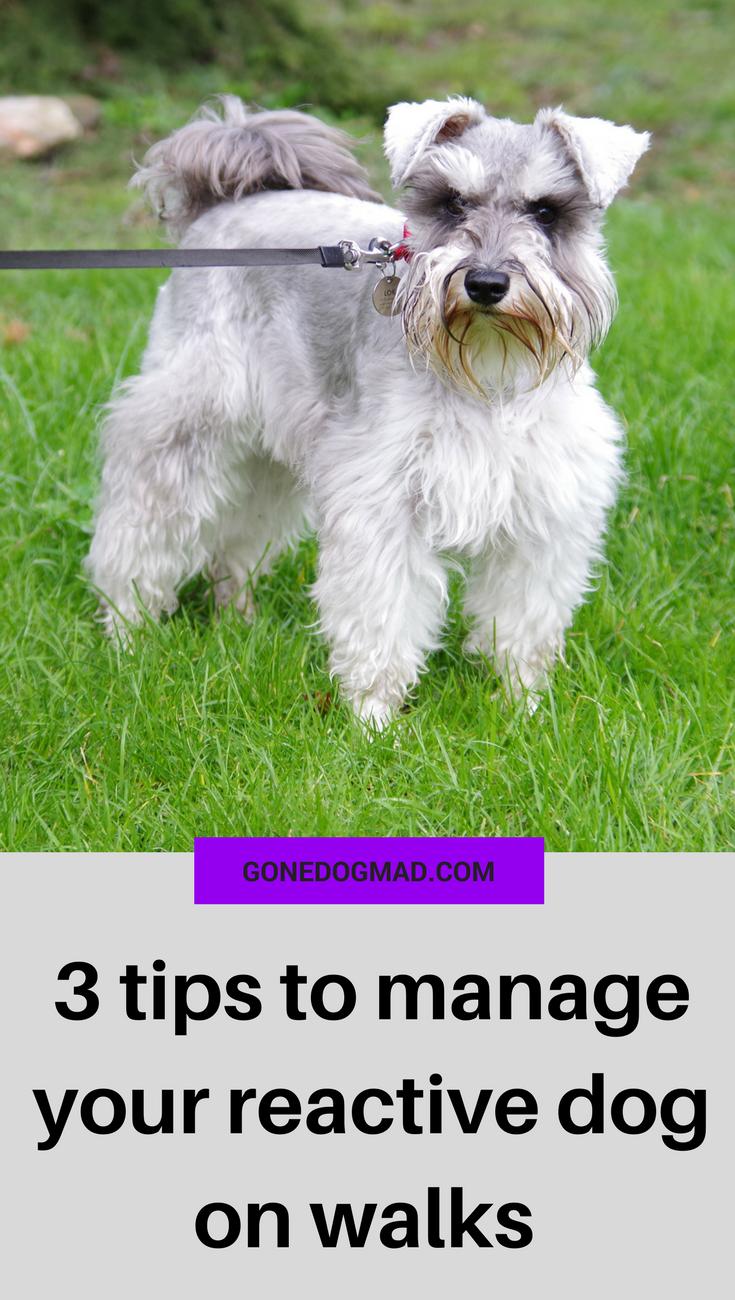 3 simple tips to keep your dog calm on a leash #dogtraining #dogs #dogcare #doglovers #dogmom via @gonedogmad1