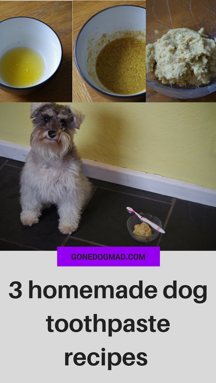 Brushing your dog's teeth is an essential part of maintaining good oral hygiene. Daily brushing will promote good oral health and keep them out of the dentist chair! If you're like me and worry about all the chemicals, flavourings and additives in shop bought dog toothpaste, making your own is an effective alternative. Here are 3 recipes you can make from 5 ingredients or less you'll find in the kitchen cupboards. #doghealth #doglovers #dogmom #dogownertips #recipesfordogs via @gonedogmad1
