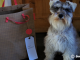 mother's day gift ideas for dog lovers, mother's day gift from dog, gift ideas for dog moms, dog mom mother's day