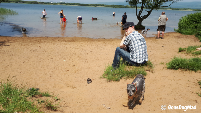 dog friendly holiday