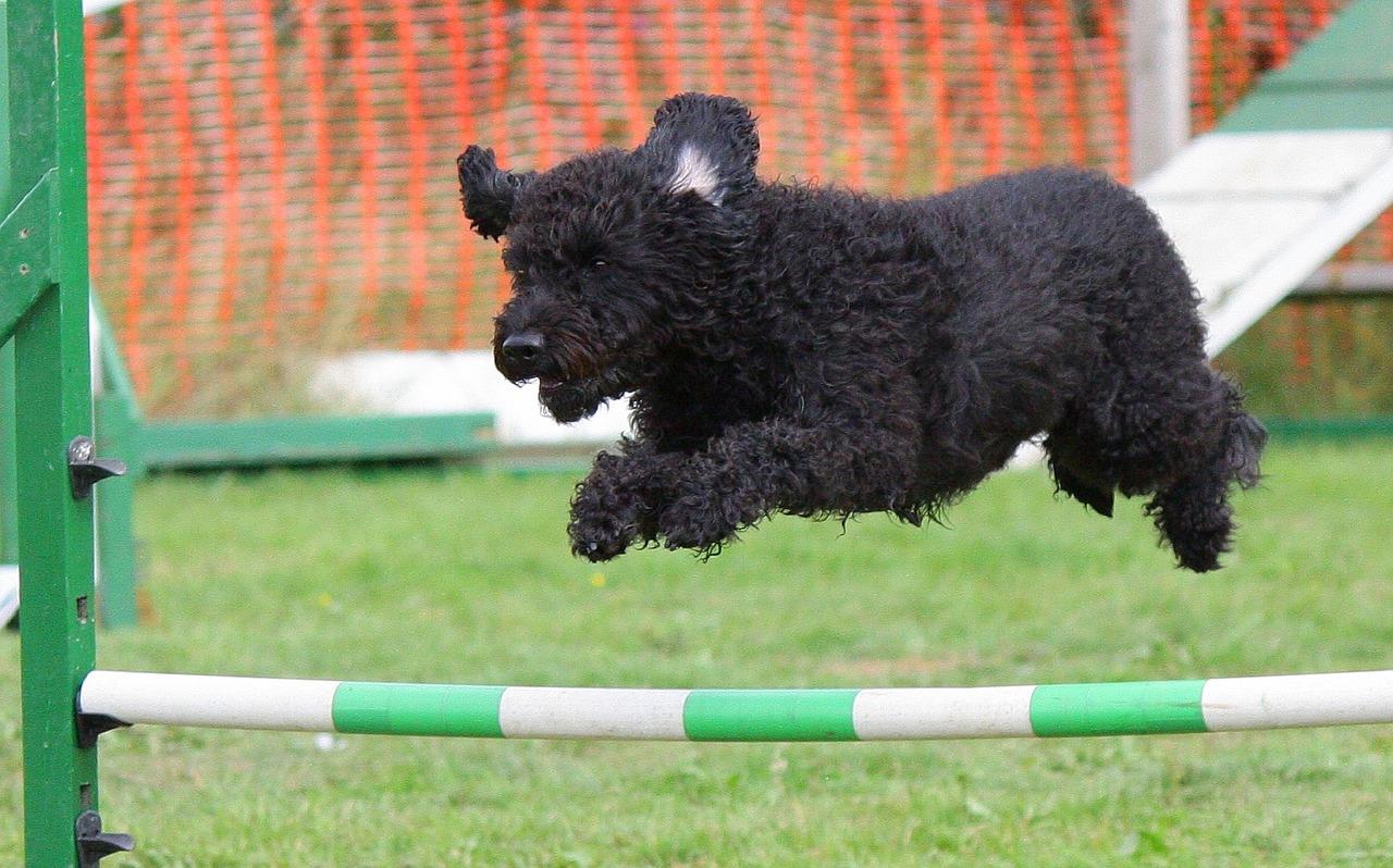 dog training holiday