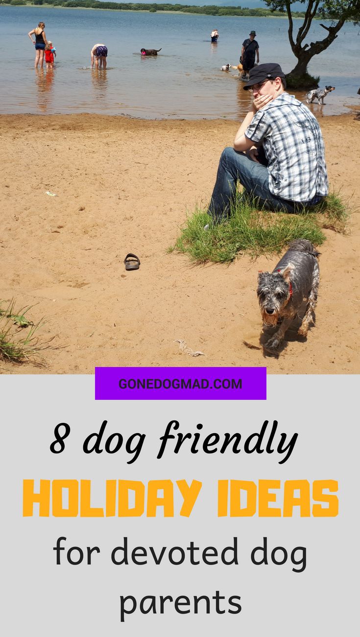 dog friendly holiday