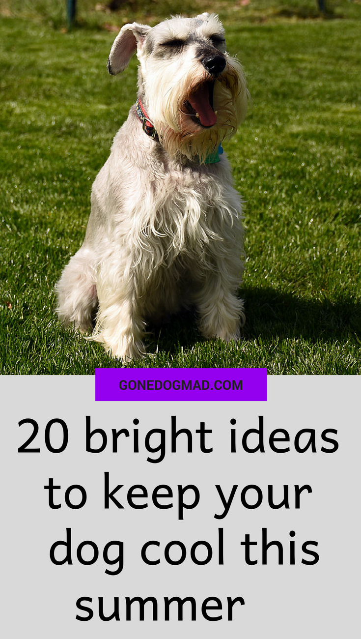 how to keep a dog cool in summer