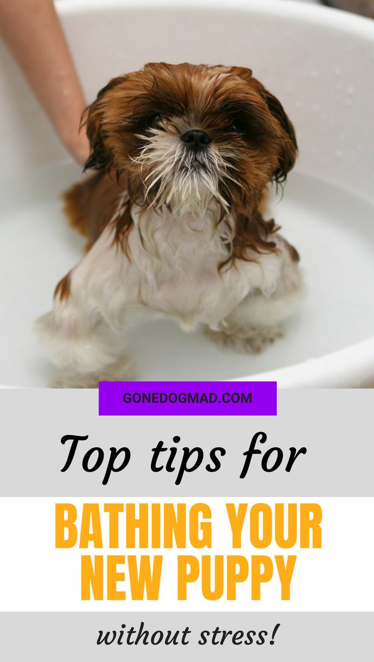 giving a puppy a bath