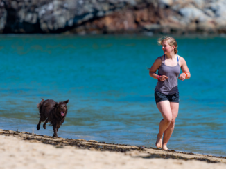 Ways to exercise with your dog