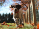 Autumn dangers for dogs