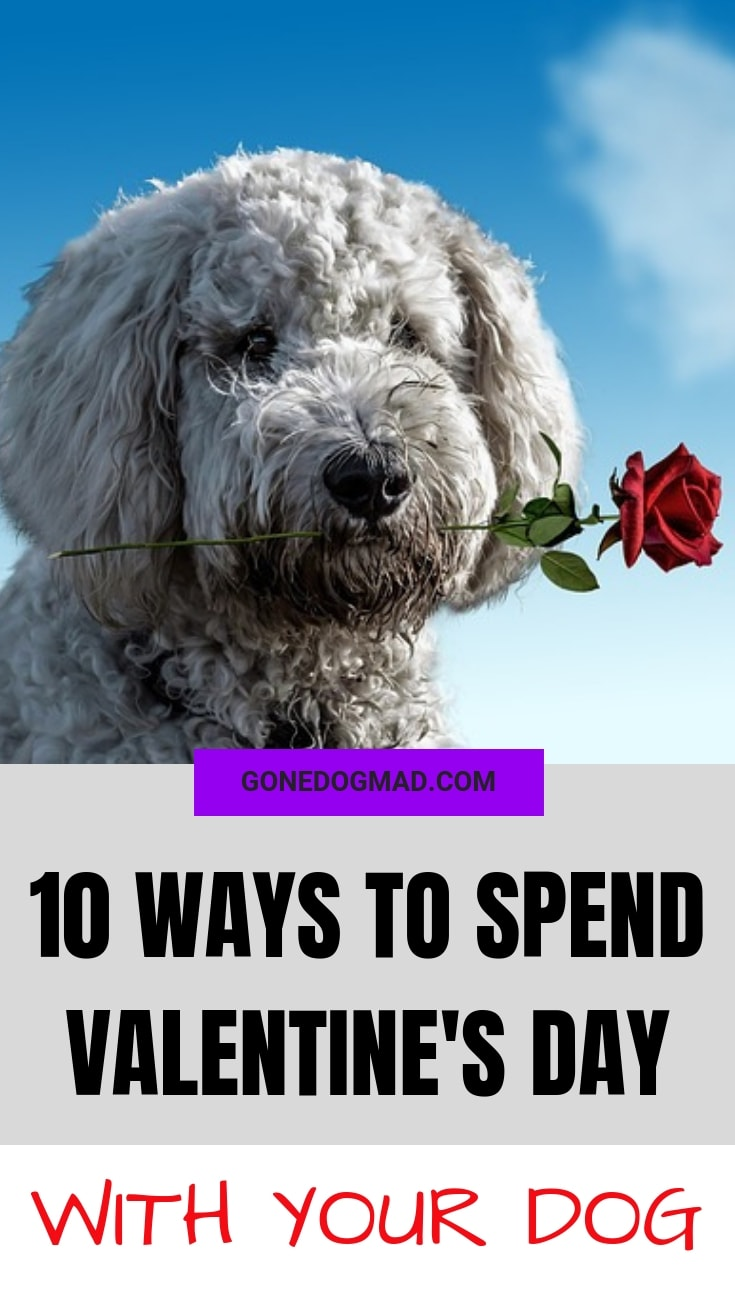 ways to spend valentines day with your dog