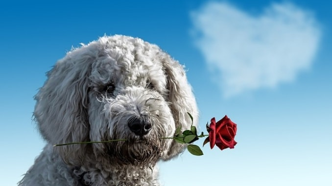 ways to spend valentine's day with your dog