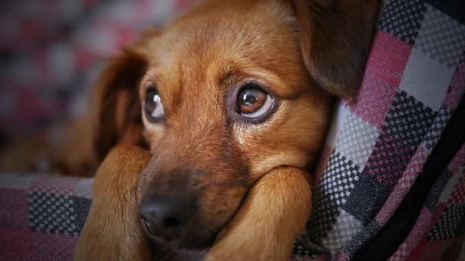 Stress relief for dogs