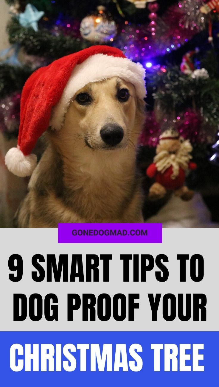DOG PROOF CHRISTMAS TREE