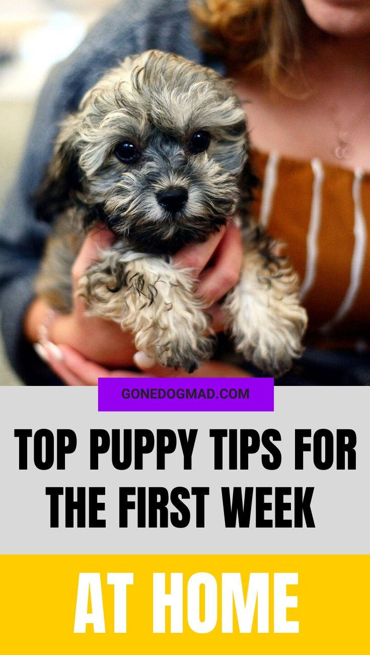 PUPPY TIPS FOR THE FIRST WEEK